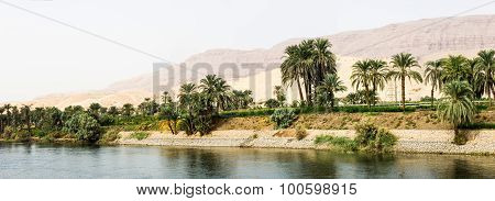 Nile Shore In Nature