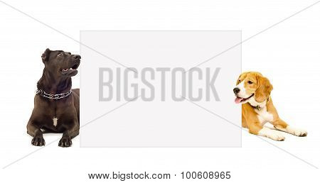 Staffordshire terrier and Beagle peeking from behind poster