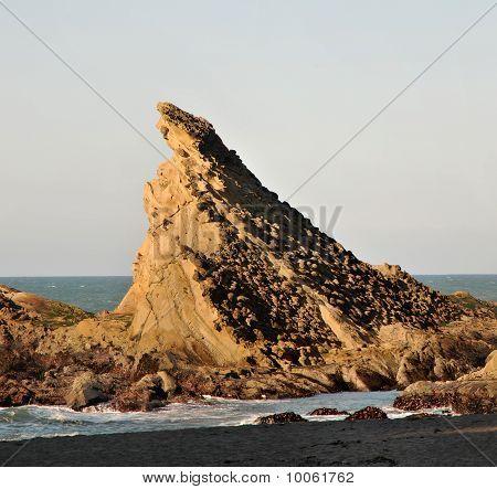 Sea Cliff