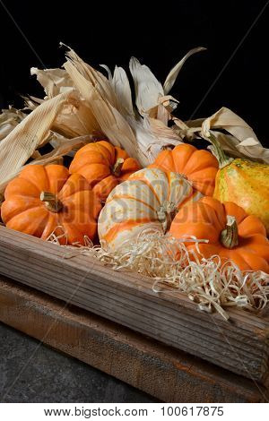 Closeup of decorative gourds and pumpkins in a wood crate against a dark background. The fall still life is in vertical format with copy space