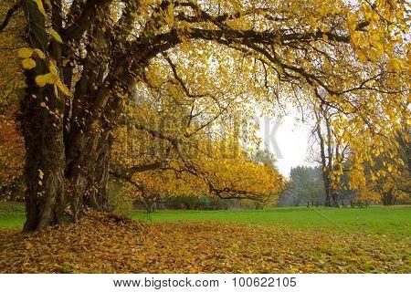 Autumn. Fall. Autumnal Park.