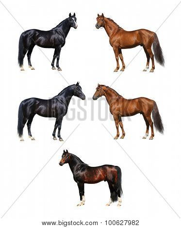 Horse collection - horses standing on white background
