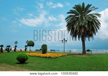Beautiful square with big palm outdoors