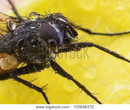 A fly sits on a yellow flower super macro
