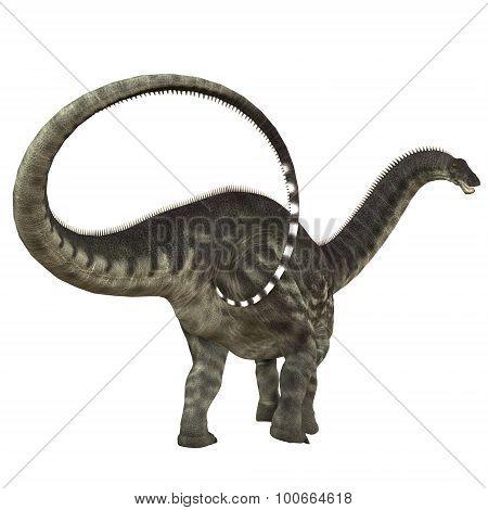 Apatosaurus Dinosaur Tail