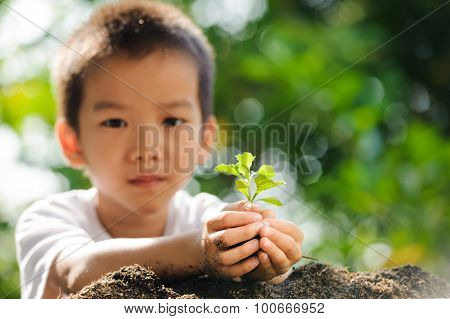 Child Holding Young Plant In Hands Above Soil