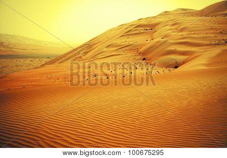 Amazing sand dune formations in Liwa oasis United Arab Emirates