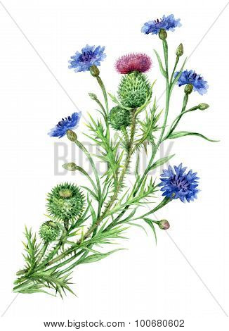 Thistle And Cornflowers Bunch.