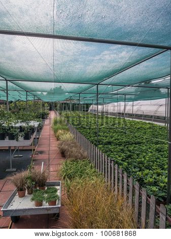 Gardening center full of cultivated plants and flowers for sale