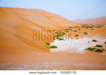 Amazing sand dune formations in Liwa oasis United Arab Emirates