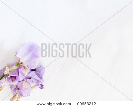 Iris Flowers On A Pink Background