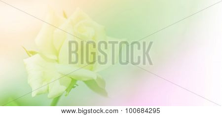 Abstract Blurry Of Rose Flower And Colorful Background. Beautiful Rose Flower Made With Colorful Fil