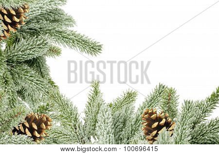 Green Christmas Tree With Cones Isolated On White