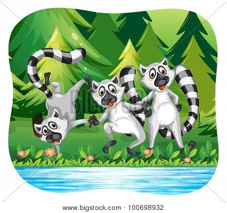 Three lemurs being happy by the river illustration