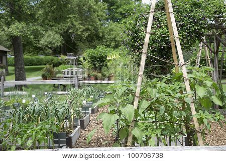Vegetable Garden with Bamboo Stakes