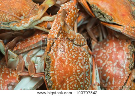 boiled horse crab