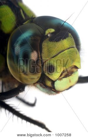 Dragonfly'S Head