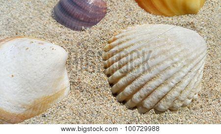 Closeup Of Sea Shells On The Sand