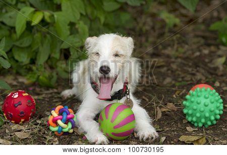 Dog Toys Funny