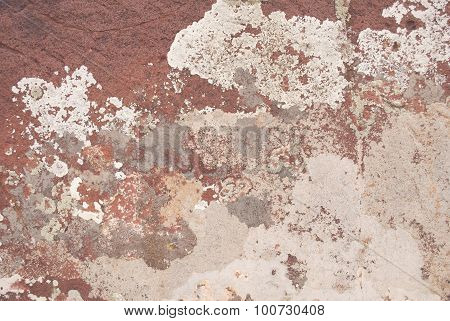 Lichens Growing On Rock Surface