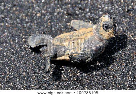 Turtle Stare