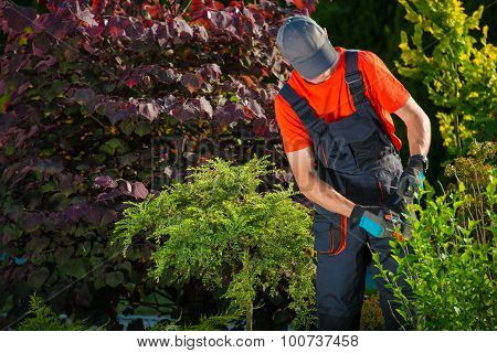 Gardener Plants Cutting