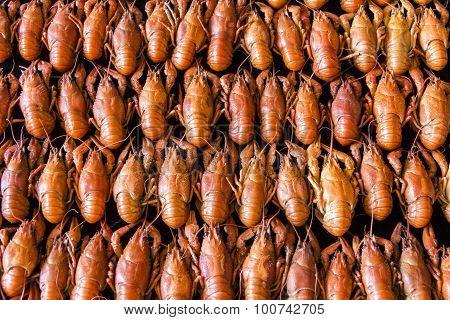 Many Crawfishes