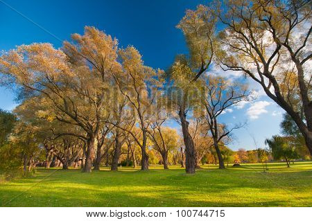 Beautiful landscape with autumnal trees against blue sky, taken in Ontario, Canada