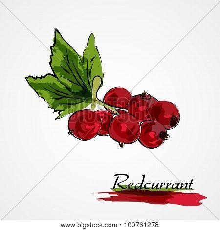 redcurrant fruit