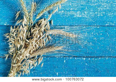 Ears Of Rye, Barley And Oats On A Blue Background