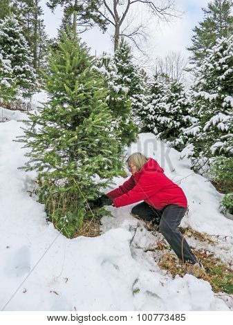 Woman Cutting A Christmas Tree