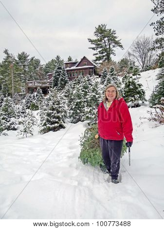 Woman Harvests A Christmas Tree