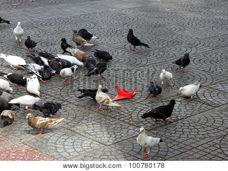 Pigeons together play with a red-paper pigeon in playground near Saigon Notre Dame Cathedral