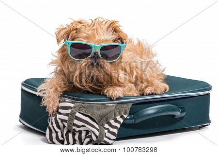 Funny Dog In Glasses Lies On The  Suitcase