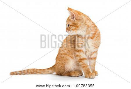 Orange, Striped, Little Kitten