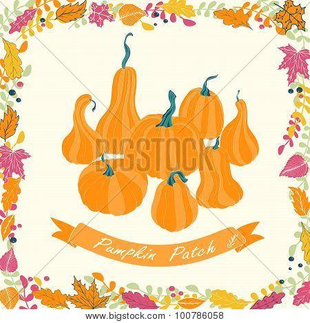 Pumpkin patch card design.