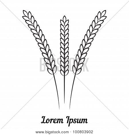 Three wheat spikelet on white background