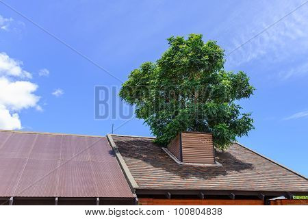 Tree Growing On The Roof Is Cool And Pleasant.