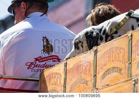 Budweiser Wooden Cases