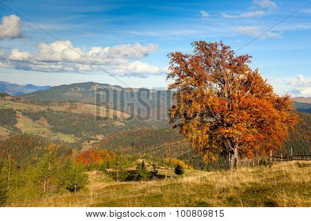 Autumn Landscape with Big Old Yellow Tree and Mountain Panorama, beautiful fall season