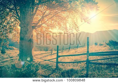 Vintage autumn tree at sunset with sunbeams, mountains landscape, retro style toned with real lens flare