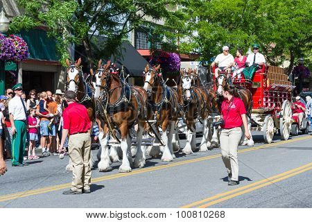 Budweiser Clydesdales In Coeur D' Alene, Idaho