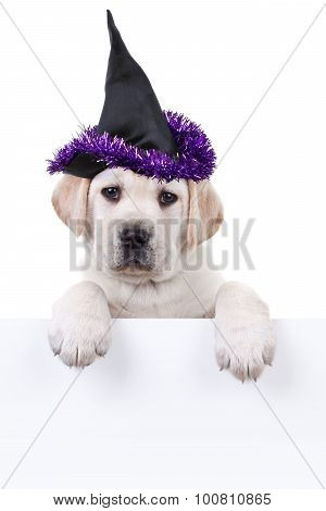 Halloween Witch Dog Sign