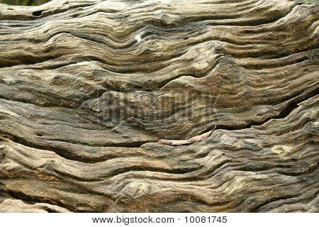 Old grain wood