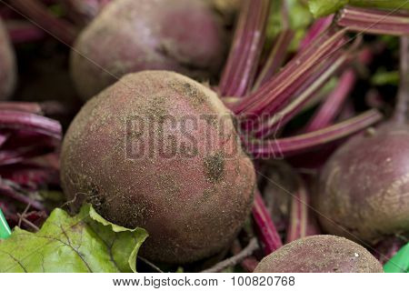 Raw, Unwashed Beetroot