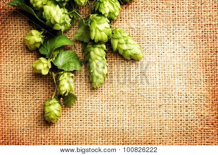 Hop on burlap close up. Twigs of Hop with cones and green leaves over sack linen texture. Burlap background. Medical concept