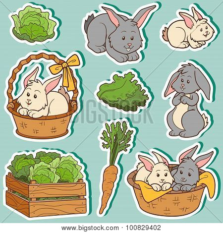 Color Set Of Cute Domestic Animals And Objects, Vector Family Rabbits And Objects