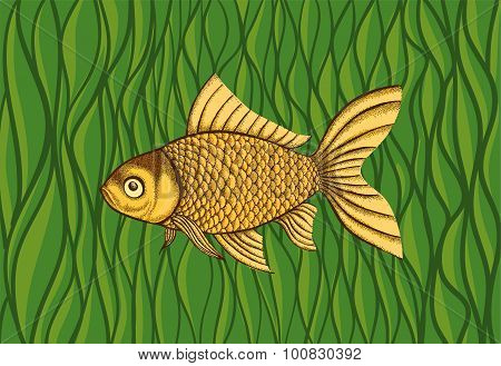 Goldfish On A Background Of Green Algae