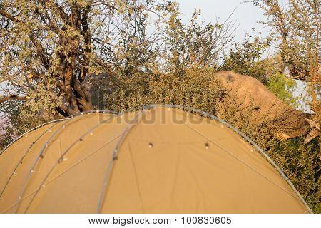 Elephant and ridge tent