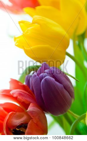 tulips in spring bouqet